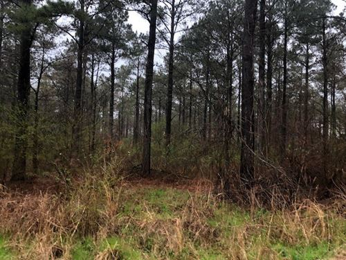 Timberland Property State Hwy 159 : Eudora : Chicot County : Arkansas