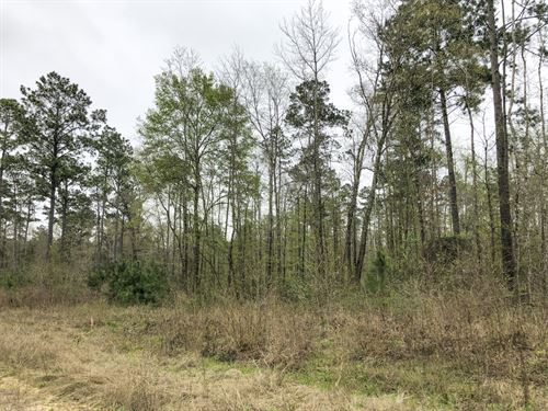 41 Acres Felix Currie Rd : Point Blank : San Jacinto County : Texas