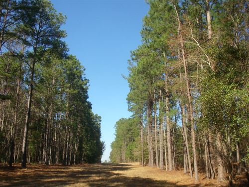 23,311 Tons Of Timber : Soperton : Treutlen County : Georgia
