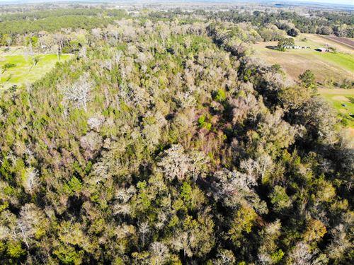 Mini Farm Development Opportunity : Monticello : Jefferson County : Florida