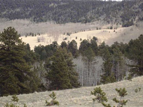 Massive Buck Wilderness : Guffey : Park County : Colorado