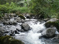 Wilderness Wonderland, River : La Suiza De Turrialba : Costa Rica