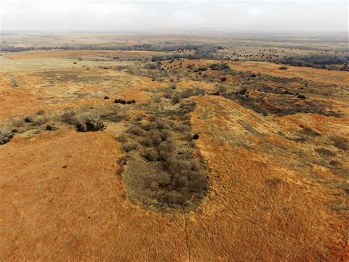 160 Acres of Secluded Hunting : Penokee : Graham County : Kansas