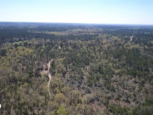 50 Acre Hunting Paradise : Leggett : Polk County : Texas