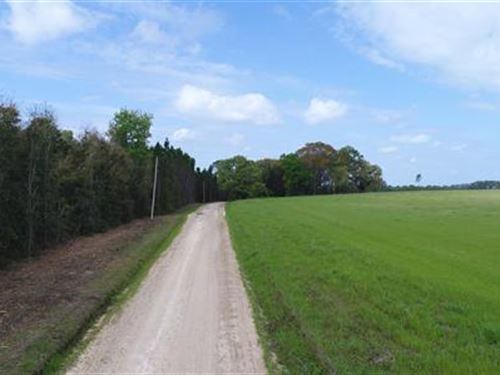Wooded Acreage In Great Area : Greenville : Madison County : Florida