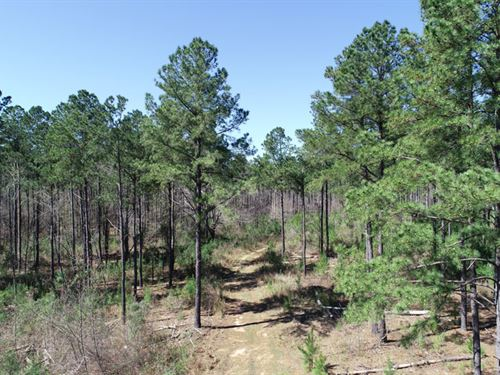 146 Acres Planted Pines : Avera : Jefferson County : Georgia