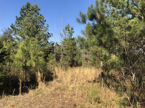 27.81 Wooded Acres : White : Bartow County : Georgia
