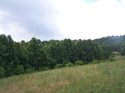 Secluded Acreage Blue Ridge : Troutdale : Grayson County : Virginia