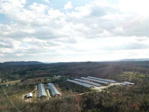 Triple L Farm : Lafayette : Walker County : Georgia