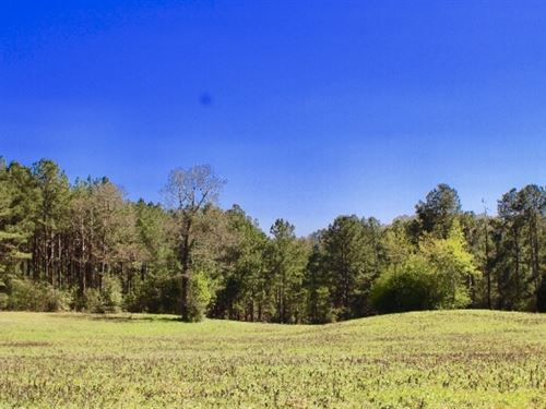 19 Acres Of Pasture And Timber And : Jayess : Lawrence County : Mississippi