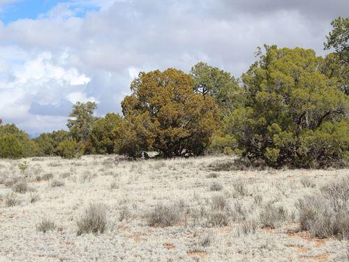 40 Acres Mountain Ranch Land : Seligman : Yavapai County : Arizona