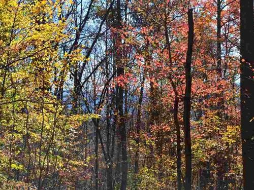 57.7 Acres Mountain Property : Sneedville : Hawkins County : Tennessee