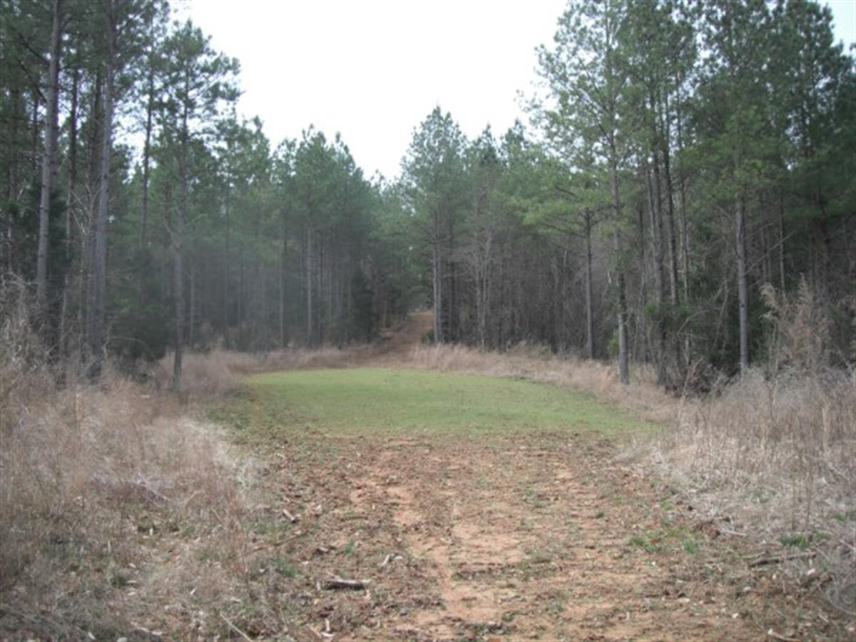 95 Acres, Cherokee County, Sc : Ranch for Sale : Gaffney : Cherokee County  : South Carolina