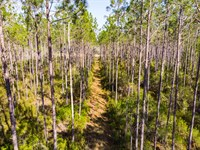 Timber And Hunting Madison Co Fl : Shady Grove : Madison County : Florida