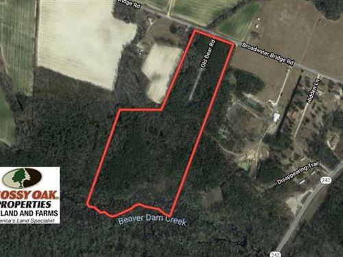 Reduced, 39 Acres of Timber And : Roseboro : Cumberland County : North Carolina