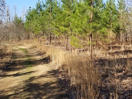 323 Acres Timberland Perfect : Centerville : Hickman County : Tennessee