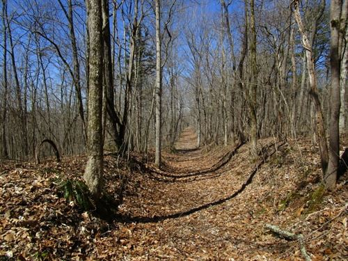 Wooded, Wildlife, Hardwoods : Edmonton : Metcalfe County : Kentucky