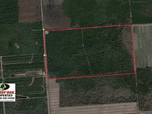 352 Acres of Timber And Recreation : Bayboro : Pamlico County : North Carolina