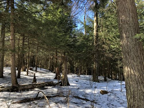 On Carleton Brook : Camden : Oneida County : New York