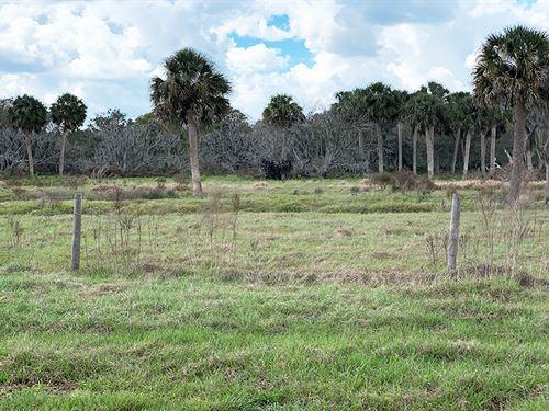 Zolfo Springs Prairie Pasture : Zolfo Springs : Hardee County : Florida