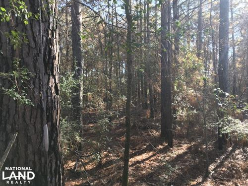 Great Hunting / Timber Tract in : Pioneer : West Carroll Parish : Louisiana