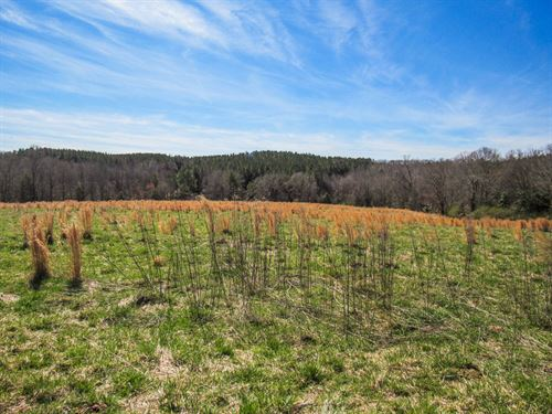 18.37 Acre Mini Farm : Woodruff : Spartanburg County : South Carolina