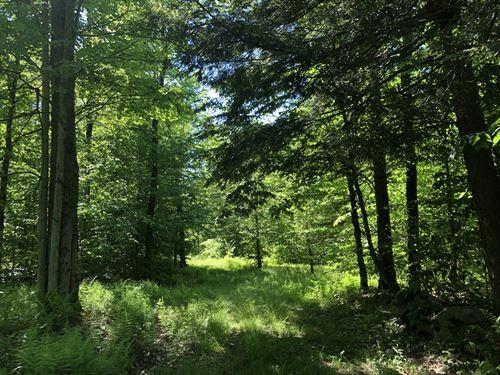Hunter's Dream : Camden : Oneida County : New York
