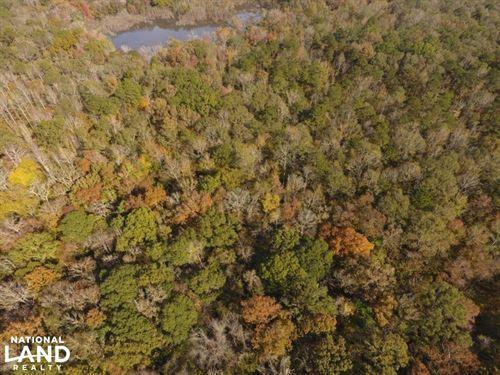 Catoma Creek Timber, Hunting : Ramer : Montgomery County : Alabama