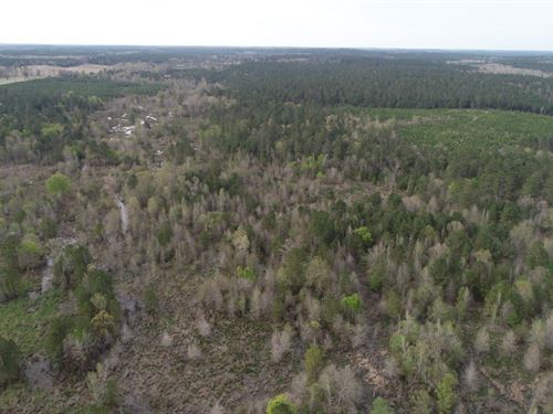 Pine / Hardwood Hunting Land : Camden : Ouachita County : Arkansas