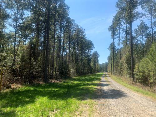 Pine Timber Land, Hardwood Creek : Mount Holly : Union County : Arkansas