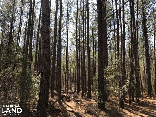Braxton Edge Hunting Land : Ammon : Bladen County : North Carolina