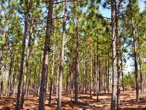 Carroll Tract : Mount Pisgah : Kershaw County : South Carolina