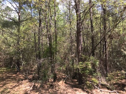 10 Acres Timberland : Tylertown : Walthall County : Mississippi
