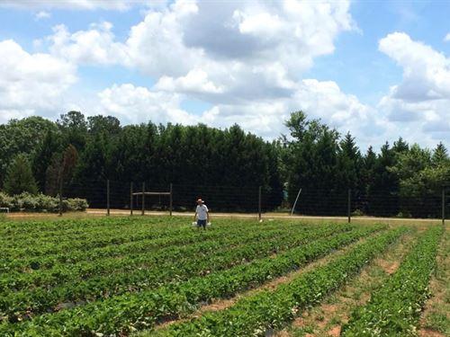 Twin Oaks Fun Farm : Forsyth : Monroe County : Georgia