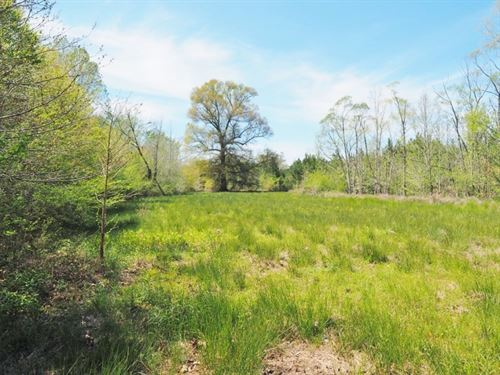 20 Acres Hunting Timber Land For Sa : Tylertown : Walthall County : Mississippi