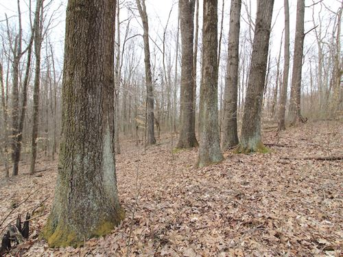 Merritt Hill Rd, 16 Acres : Dexter City : Noble County : Ohio