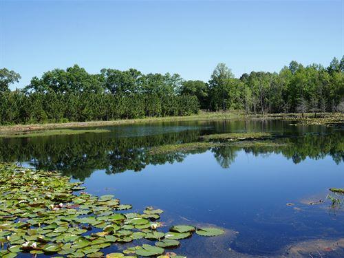 Saunders Pond : Portal : Bulloch County : Georgia