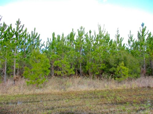 25 Acres Undeveloped Land : Millwood : Ware County : Georgia