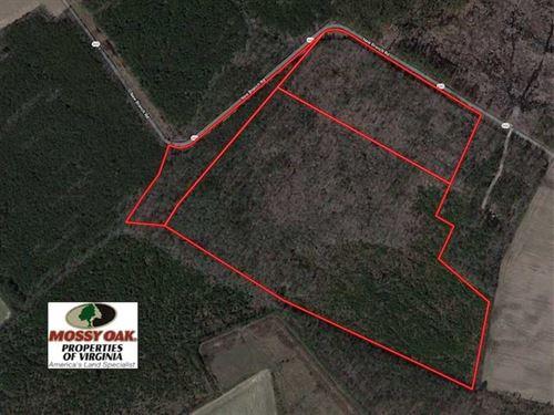 95 Acres of Recreational Timber LA : Onancock : Accomack County : Virginia