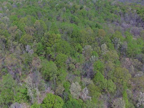 Kentucky Hunting Land, Camping : Liberty : Casey County : Kentucky