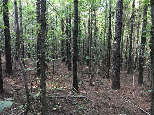 162 Acres in Lamar County, AL Clos : Vernon : Lamar County : Alabama