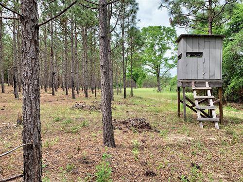 Secluded 167 Acres Hunting Land : Black : Geneva County : Alabama