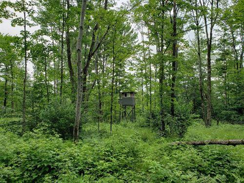 White Pine Camp Lot : Williamstown : Oswego County : New York