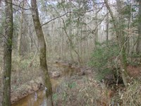 Beautiful Small Tract / Big Creek : Ideal : Macon County : Georgia