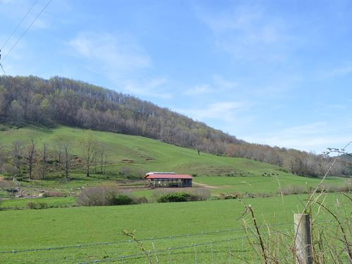 Extremely Nice Farm 38.49 Acres : Sparta : Alleghany County : North Carolina