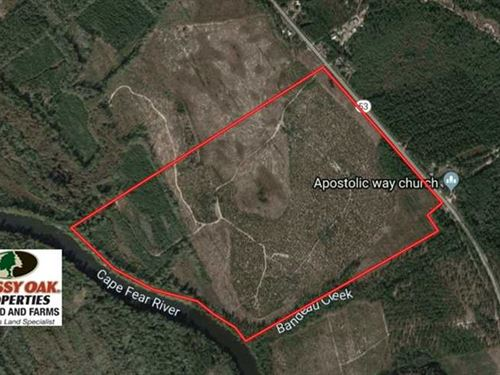 196 Acres of Hunting And Timber LA : Kelly : Bladen County : North Carolina