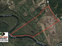 220 Acres of Hunting And Timber LA : Kelly : Bladen County : North Carolina