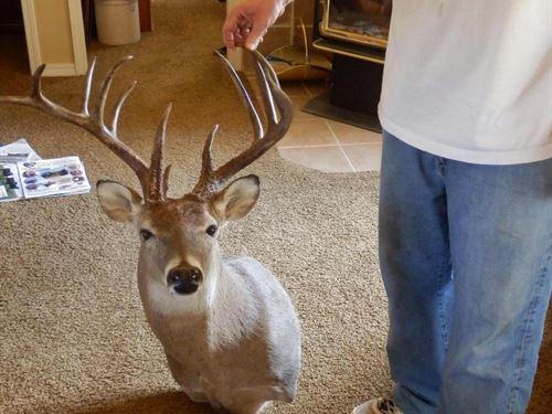 Destiny Ranch 160 North : Saint Louis : Pottawatomie County : Oklahoma