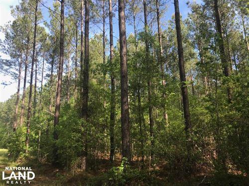 Savannah Creek Rec Tract : Jamestown : Berkeley County : South Carolina