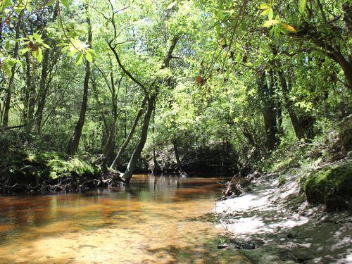 Fox Creek Tract : Defuniak Springs : Walton County : Florida